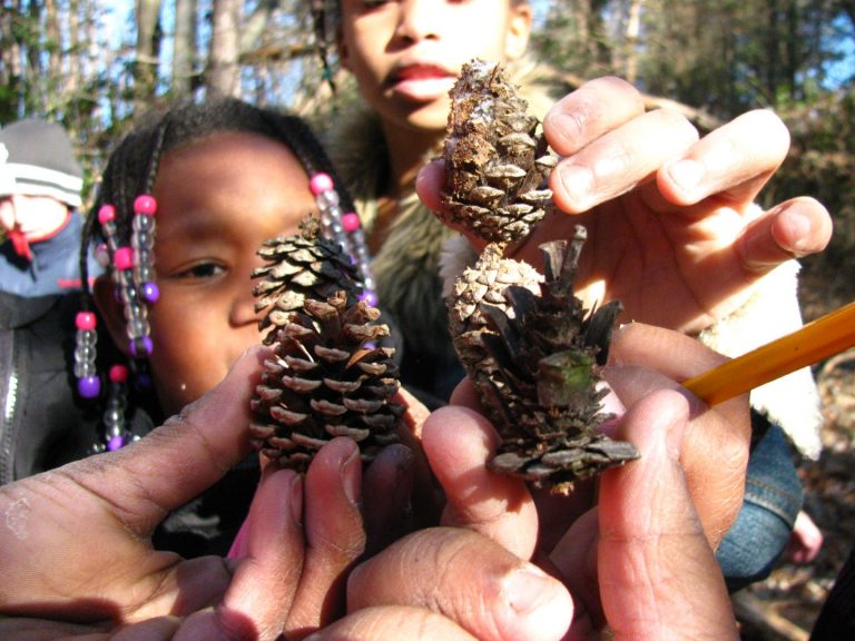 close up photo of children holding pine cones