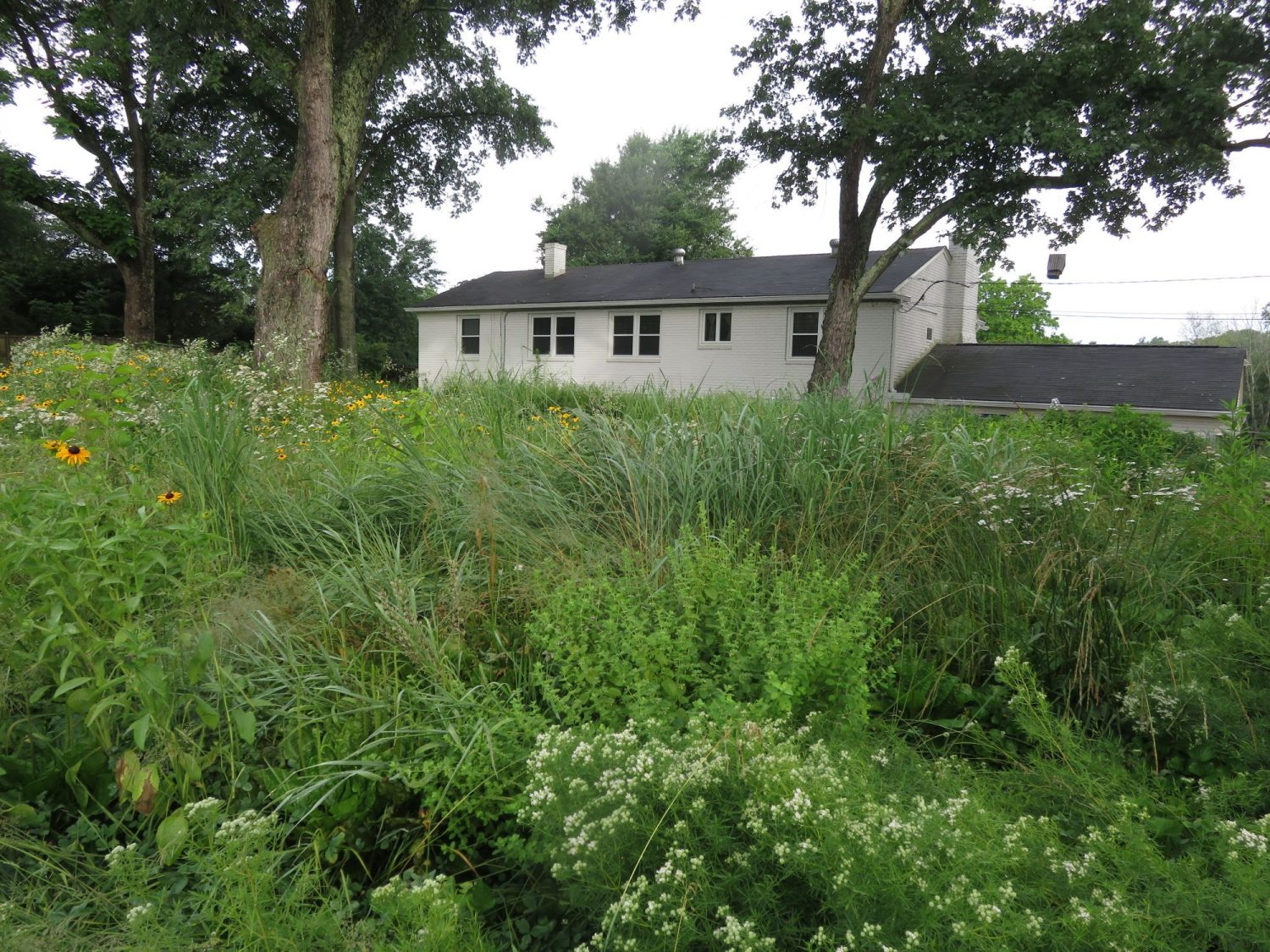 Native lawn in front of a small, white home