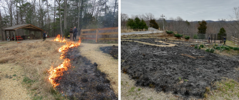controlled burn in backyard - during the burn and after the burn