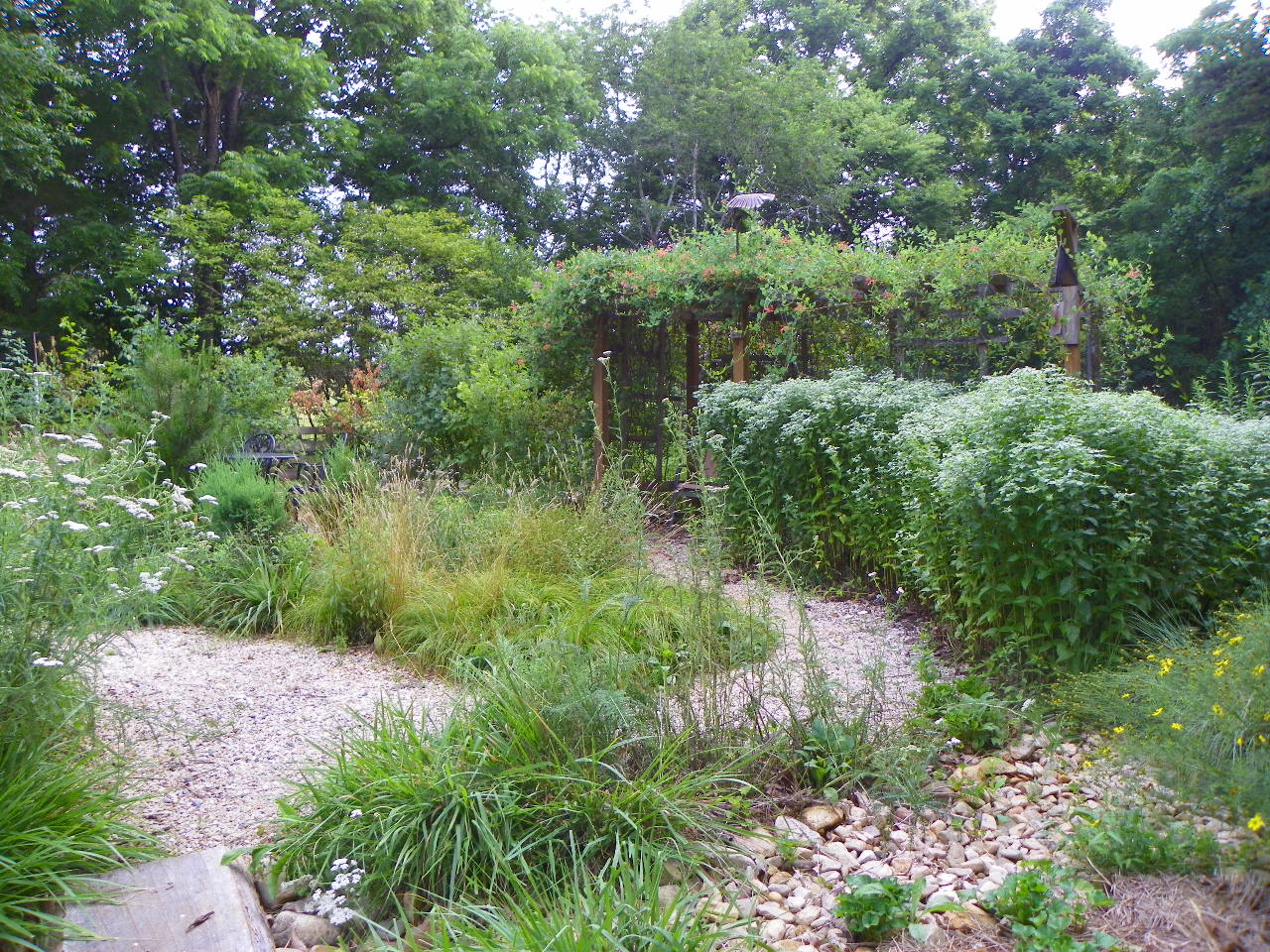Photo of garden in July 2020